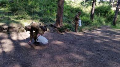 Photo of Pineta di Fiaiano: a pulirla ci pensa l'Aenaria softair