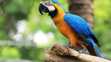 Photo of Charly, il pappagallo salvato dalle acque