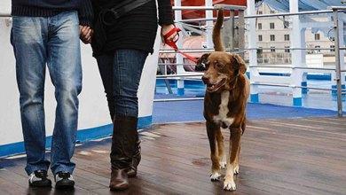 Photo of Cani e gatti ammessi a Ischia ma per loro, il viaggio in nave, si fa all'esterno