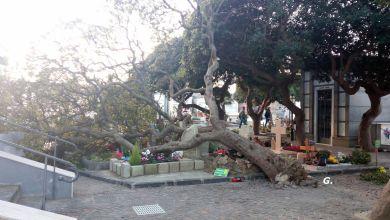 Photo of Forio, paura nel cimitero: grosso albero sradicato dal vento