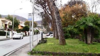 Photo of Allarme nella pineta degli Atleti, pini a rischio crollo