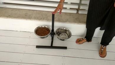 Photo of Nessun quattro zampe a Ischia fa vita da cani In spiaggia, ristorante o albergo sono ospiti di riguardo