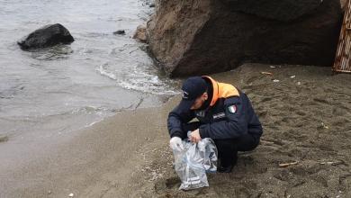 Photo of Spiaggiamento dei gamberetti a San Montano, nessun mistero: è stato un fenomeno naturale