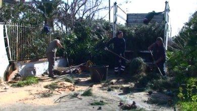 Photo of PCIML: Abbattuti albero a rischio, decisive le nostre denunce