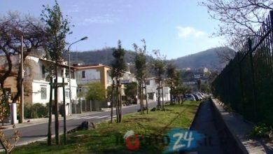 Photo of Nuovi alberi piantati a Ischia, esulta il PCIML