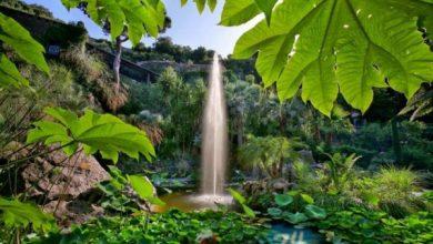 Photo of Giardini La Mortella, dal 2 aprile al via la stagione 2019