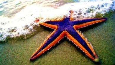 Photo of La stella di mare che voleva volare dallo scoglio del gabbiano