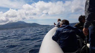 Photo of I delfini posano davanti alle telecamere di Linea Blu