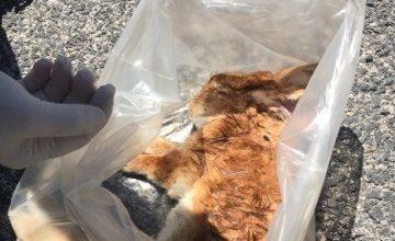 Photo of LA STORIA La denuncia: 48 ore per rimuovere dalla strada un coniglio morto