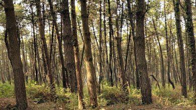 Photo of Piano di gestione forestale, assegnato l'incarico al dottor Fusco