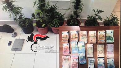 Photo of Piante di cannabis e 57.000 euro nel negozio, due denunciati a Procida