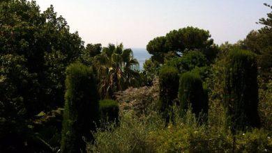 Photo of Parco Nazionale di Zaro, si accende il dibattito a Forio