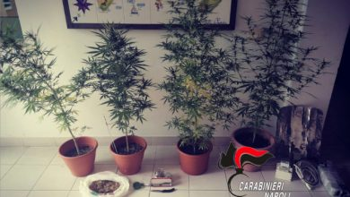 Photo of Procida: piante e  semi di marijuana in casa, 31enne arrestato dai Carabinieri