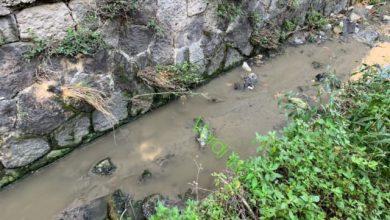 Photo of L'isola dei topi morti: «Ritrovati anche al Rio Corbore»