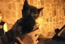 Photo of Miagolii dall'auto, i vigili del fuoco salvano gattino alla Chiaia