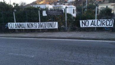 Photo of Stop al circo con gli animali, dal Consiglio Regionale arriva il decreto