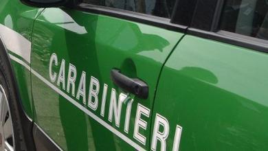 Photo of Controlli antiabusivismo dei Forestali, tre denunciati a Ischia