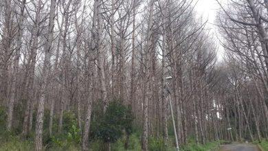 Photo of Bosco della Maddalena, ok all'abbattimento degli alberi a rischio
