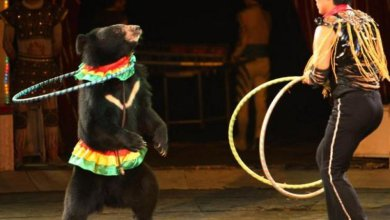 Photo of Circo senza animali a Ischia, c'è il plauso dell'isola
