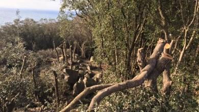 Photo of Zaro: alberi tagliati nel bosco: chi controlla?