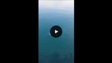 Photo of Nel porto di Pozzuoli spunta uno squalo, il Video