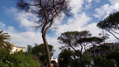 Photo of LA FOTONOTIZIA Pino secco in via De Luca, rischi per i passanti