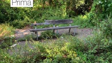 Photo of ISCHIA Eppur si muove, al via la pulizia delle pinete