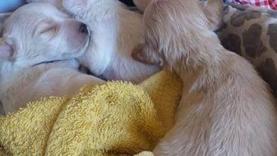 Photo of IL CASO Stanno bene gli undici cuccioli abbandonati