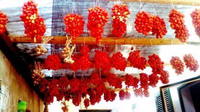Photo of Il Covid-19 non ferma la passione per le bottiglie di pomodoro Sull'isola è già festa di sapori e colori con i nostri pomodori