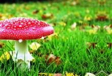 Photo of Con l'autunno già scattata nei boschi dell'isola la caccia agli amati funghi gli appassionati alla ricerca dei porcini che sono buoni e sicuri