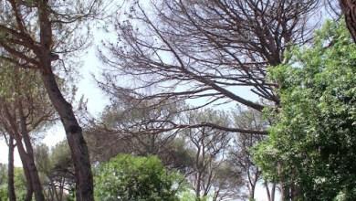 Photo of LETTERA APERTA AL SINDACO D'ISCHIA La pineta e quei topacci che ormai ci assalgono