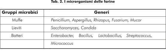I<br /><br />microrganismi delle farine
