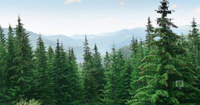 Afbeelding met boom, buiten, lucht, conifeer Automatisch gegenereerde beschrijving