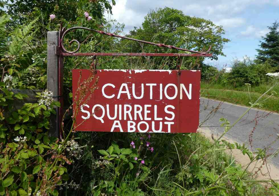 Caution: Squirrels About, Isle of Arran