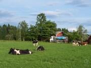 Maatilan elämää