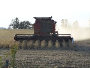 A soybean combine harvester