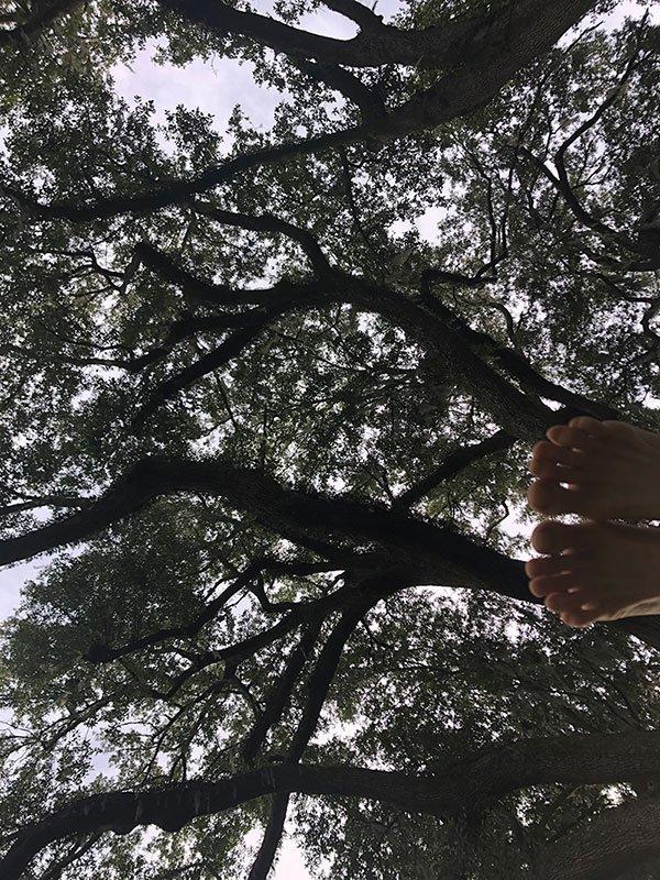 Meditative Morning Under the Oaks