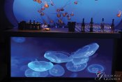 Jellyfish-Bar