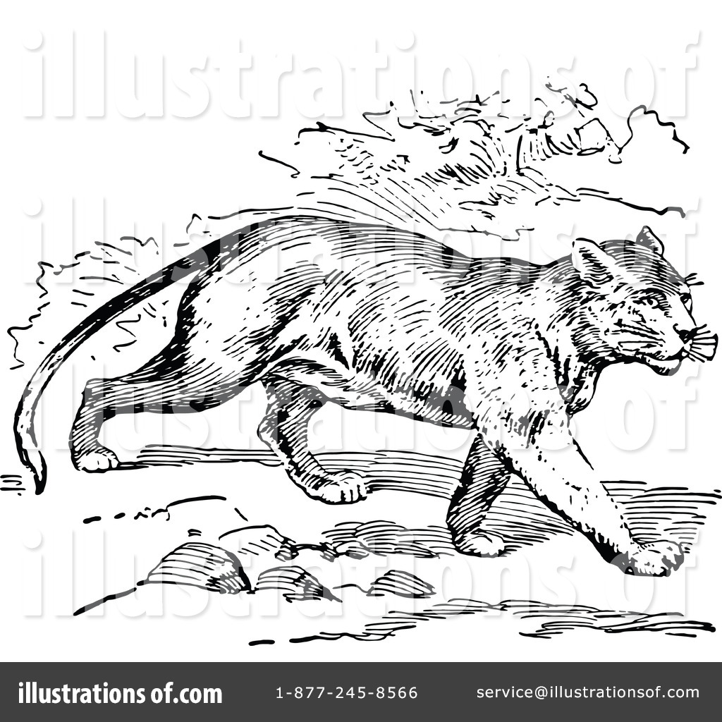 wildcat mascot clipart