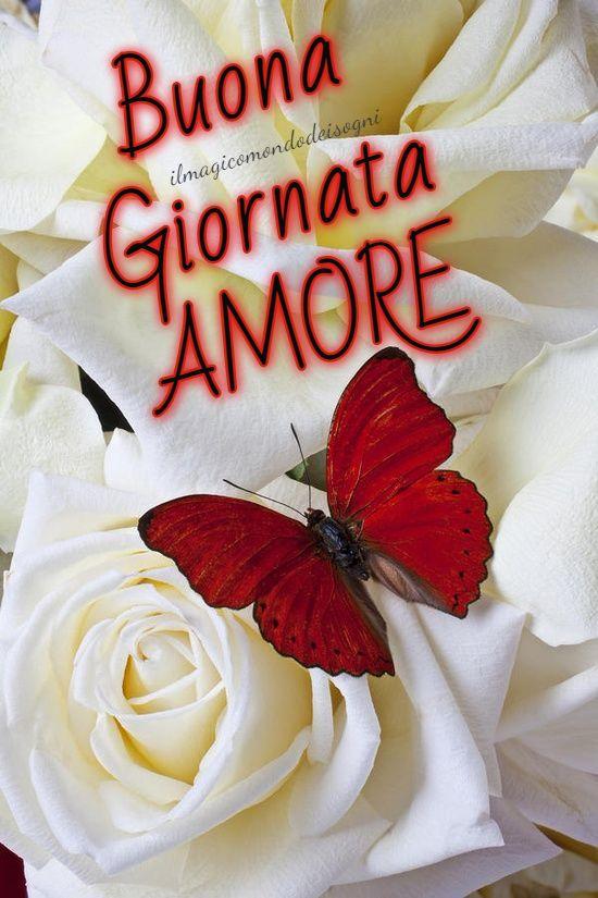 Cartoline Buona Giornata Amore Il Magico Mondo Dei Sogni