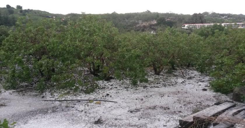 Grandinata colpisce Bronte: ingenti danni alle coltivazioni di pistacchio