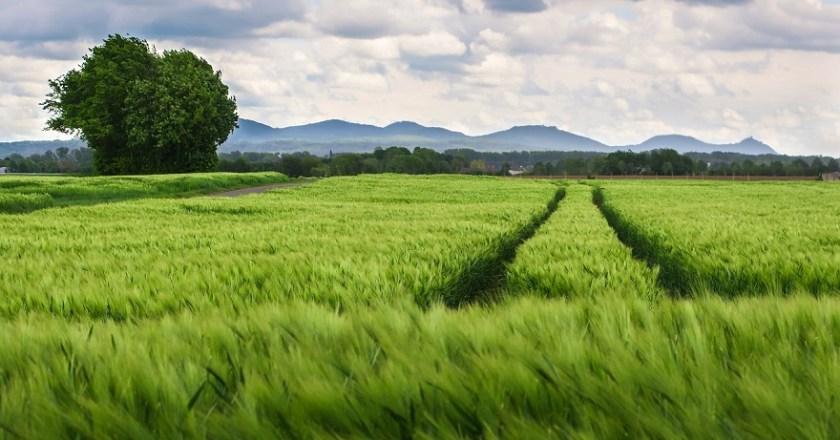AgriFood, un corso per diventare esperto delle filiere agroalimentari