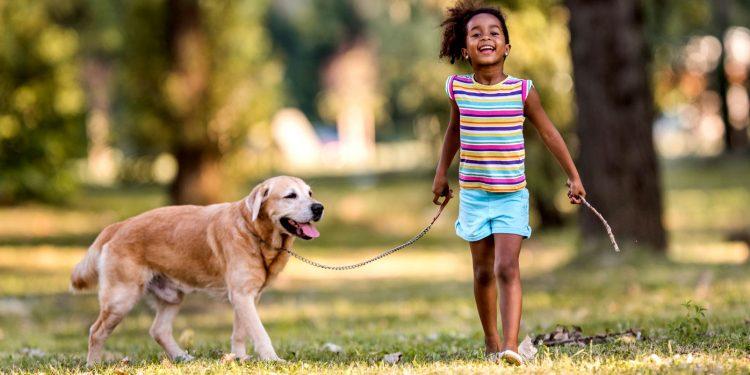 """Il """"rispetto per i cani"""" è la nuova materia che verrà insegnata nelle scuole"""