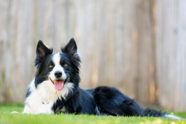 Pericoli estivi per i cani: 10 rischi da evitare