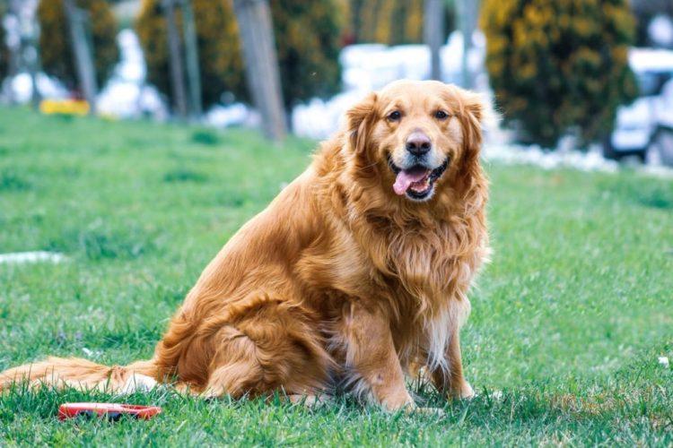 Crocchette dietetiche per cani: come far dimagrire il cane grasso o obeso