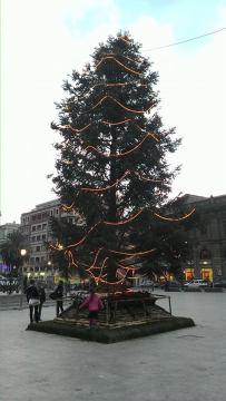 albero illuminato