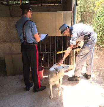 Canile abusivo allo ZEN - Carabinieri e Forestale