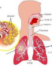 Alergi Asma Bronkial