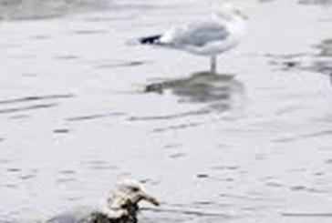 Adriatico: nessun inquinamento in corso