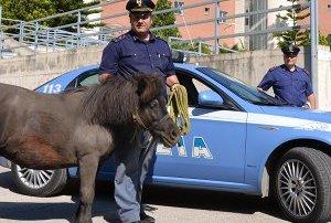 Pony vaga smarrito per strada, intervengono Polizia e Vigili del Fuoco